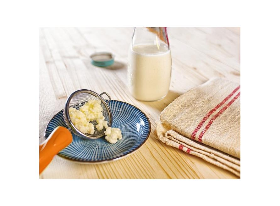 Le kéfir de lait pour améliorer ses anticorps